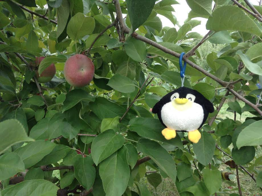 Apple Picking at Mack's.jpg