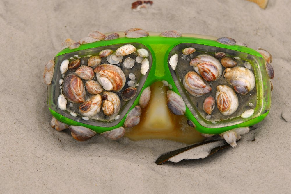 Ocean snails called limpets using this plastic diving mask as a support for the community. Photo courtesy of  Wikimedia.