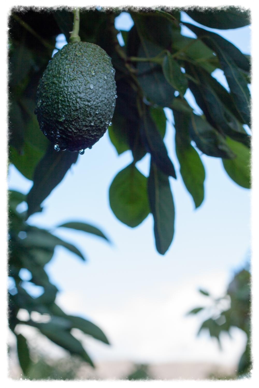 JD Fruits-6.jpg
