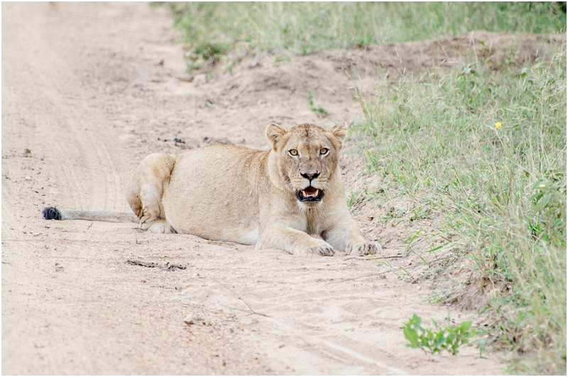 Kapama Hoedspruit Safari Wedding_0075