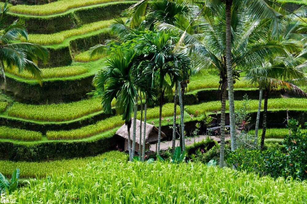 Bali : dec 2016-Feb 2017