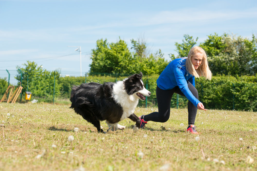 Games with Gatsby at The Dogs Trust
