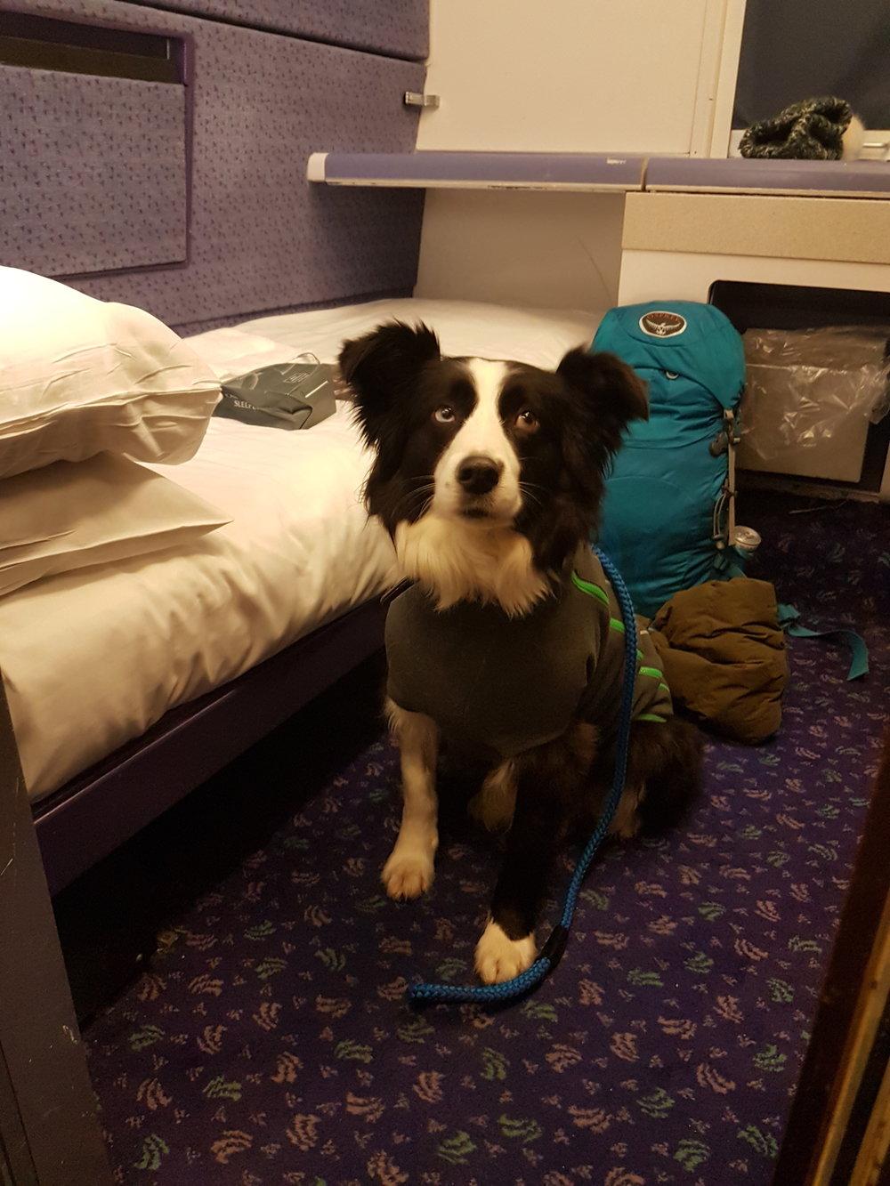 Dog on Scotland Sleeper Train.jpg