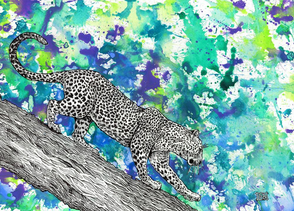 Leopard (Splash)