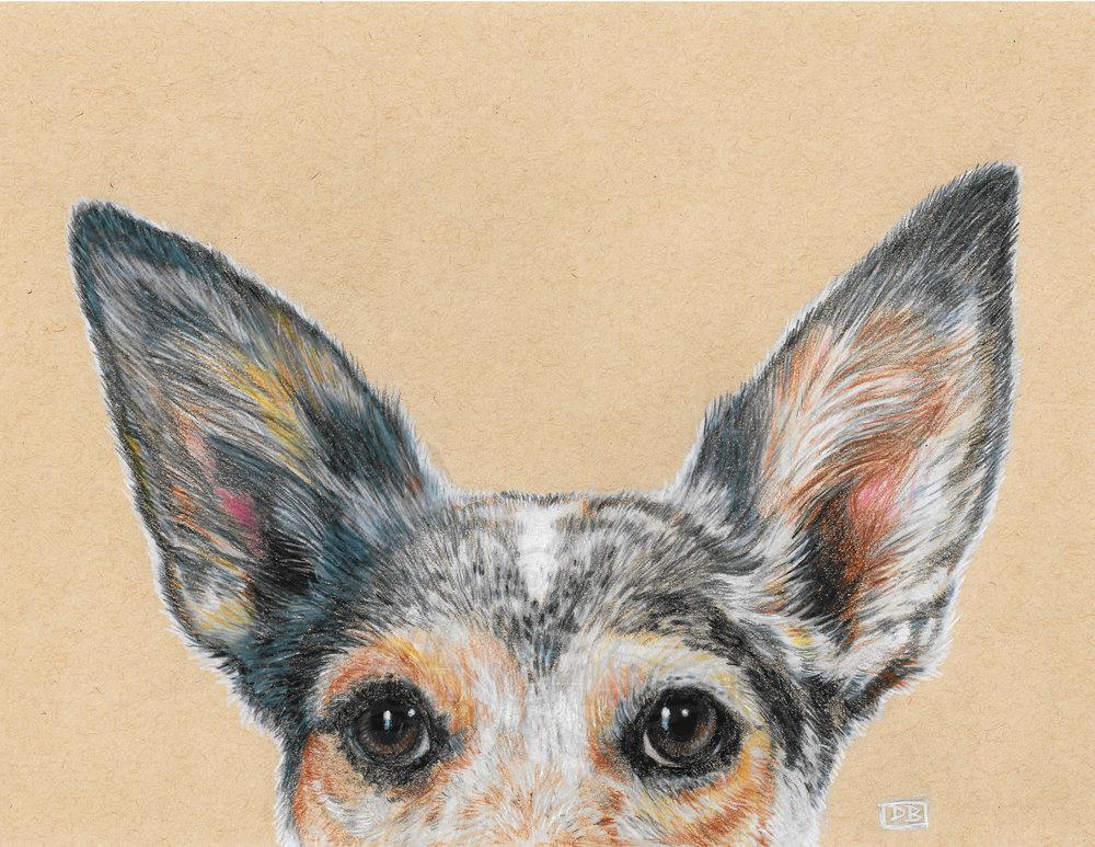 Nymeria (Australian Cattle Dog Mix)
