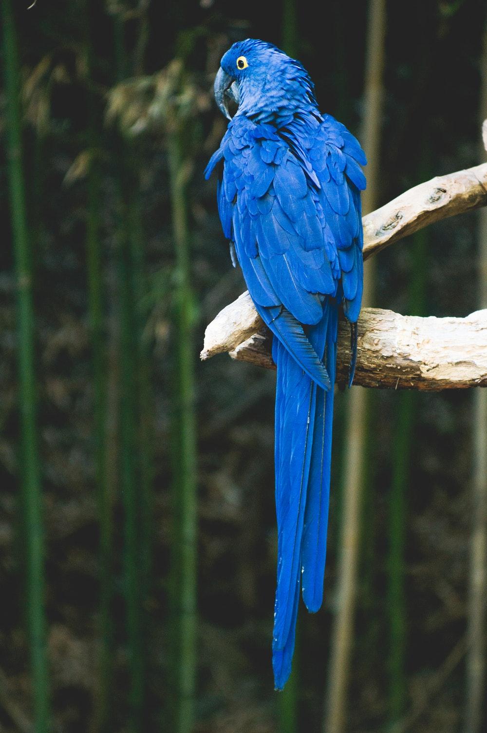 atom interio styling blue parrot.jpg