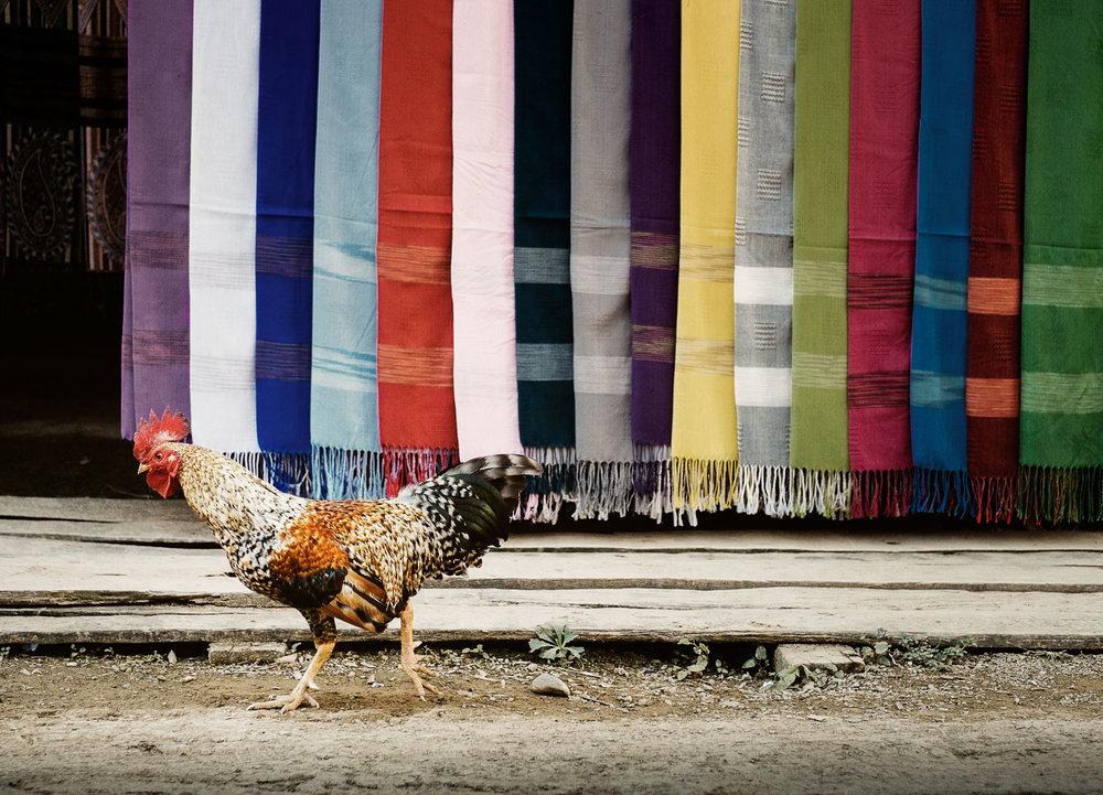 Luang_Prabang_Cock.jpg