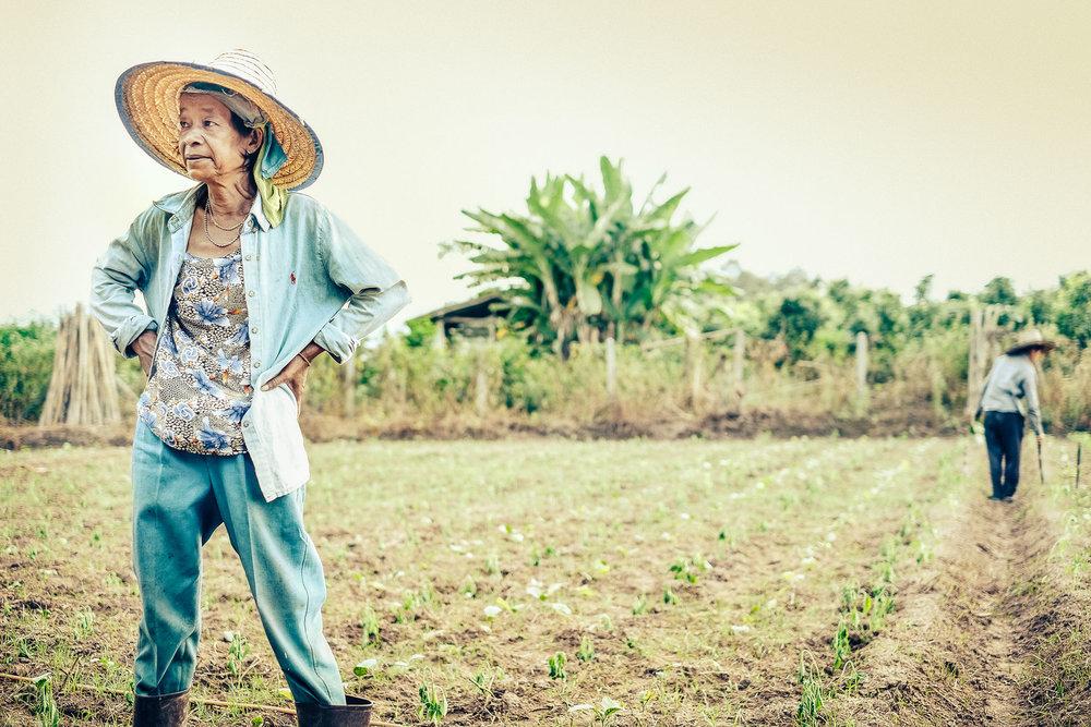 Farmer_Woman_ChiangMai.jpg