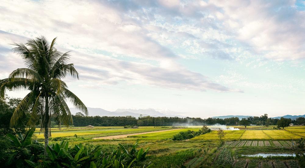 Farmers_Field_ChiangMai.jpg