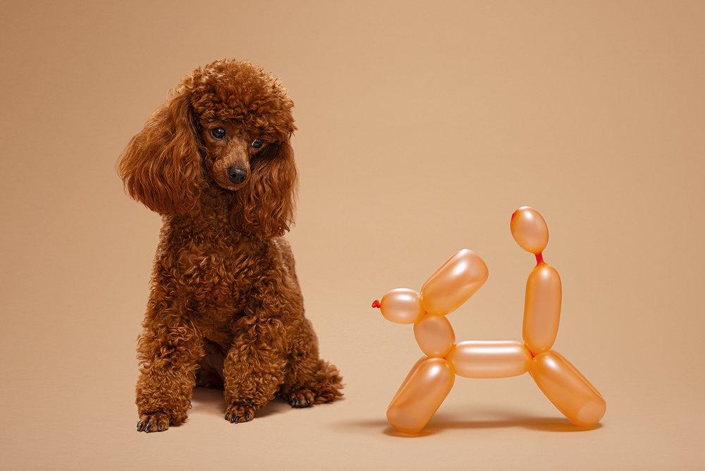 Dog_Portraits_Dutchess.jpg