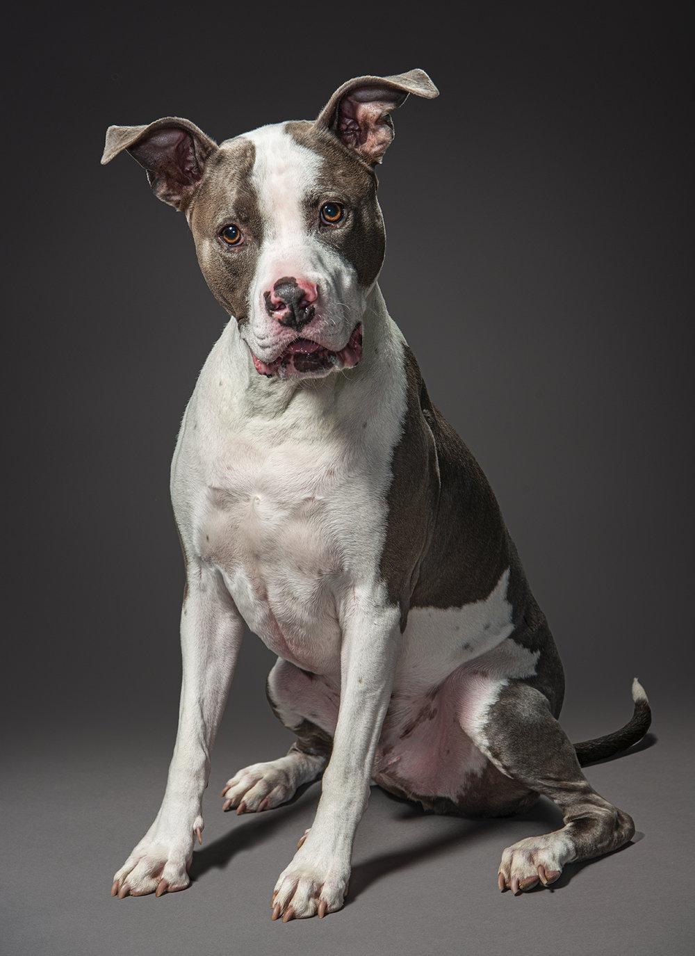 Dog_Portraits_Gunnar_1.jpg