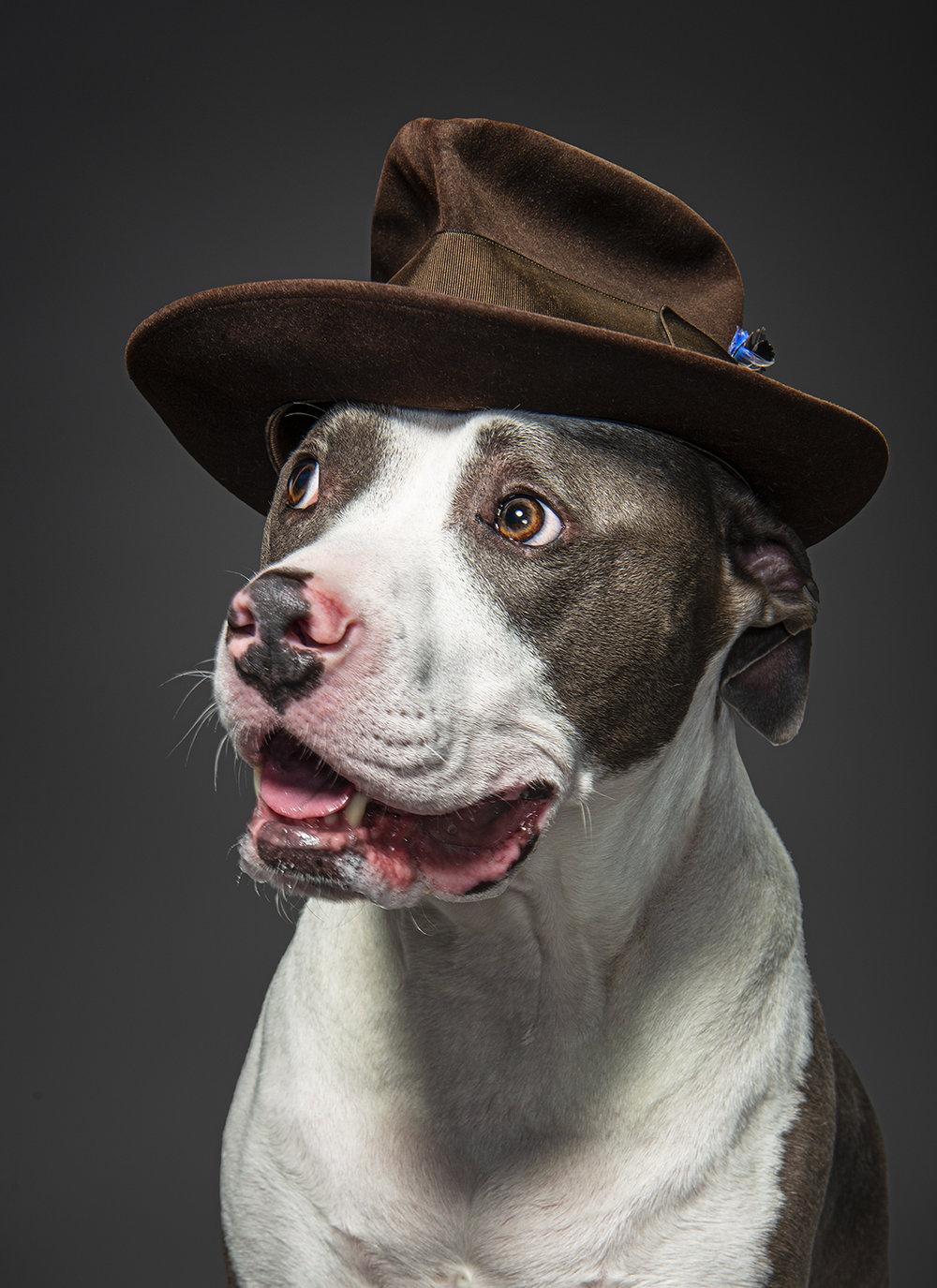 Dog_Portraits_Gunnar.jpg