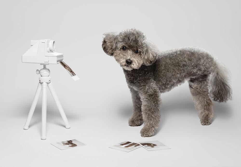Dog_Portraits_Paula.jpg