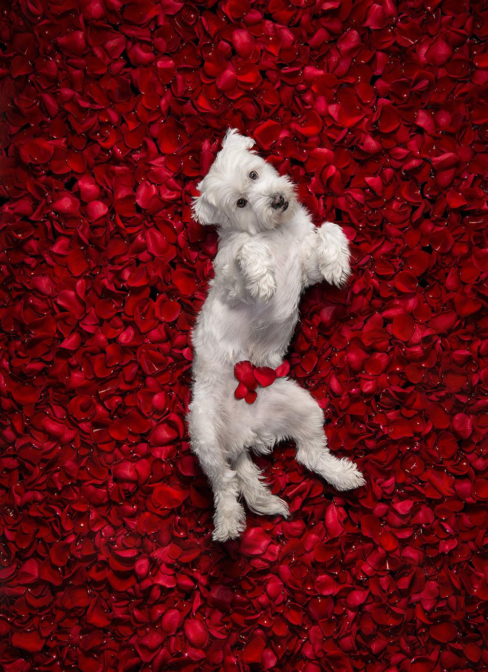 Dog_Portraits_Turbo.jpg