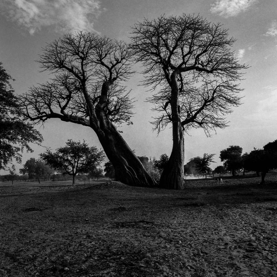 baobab-6.jpg