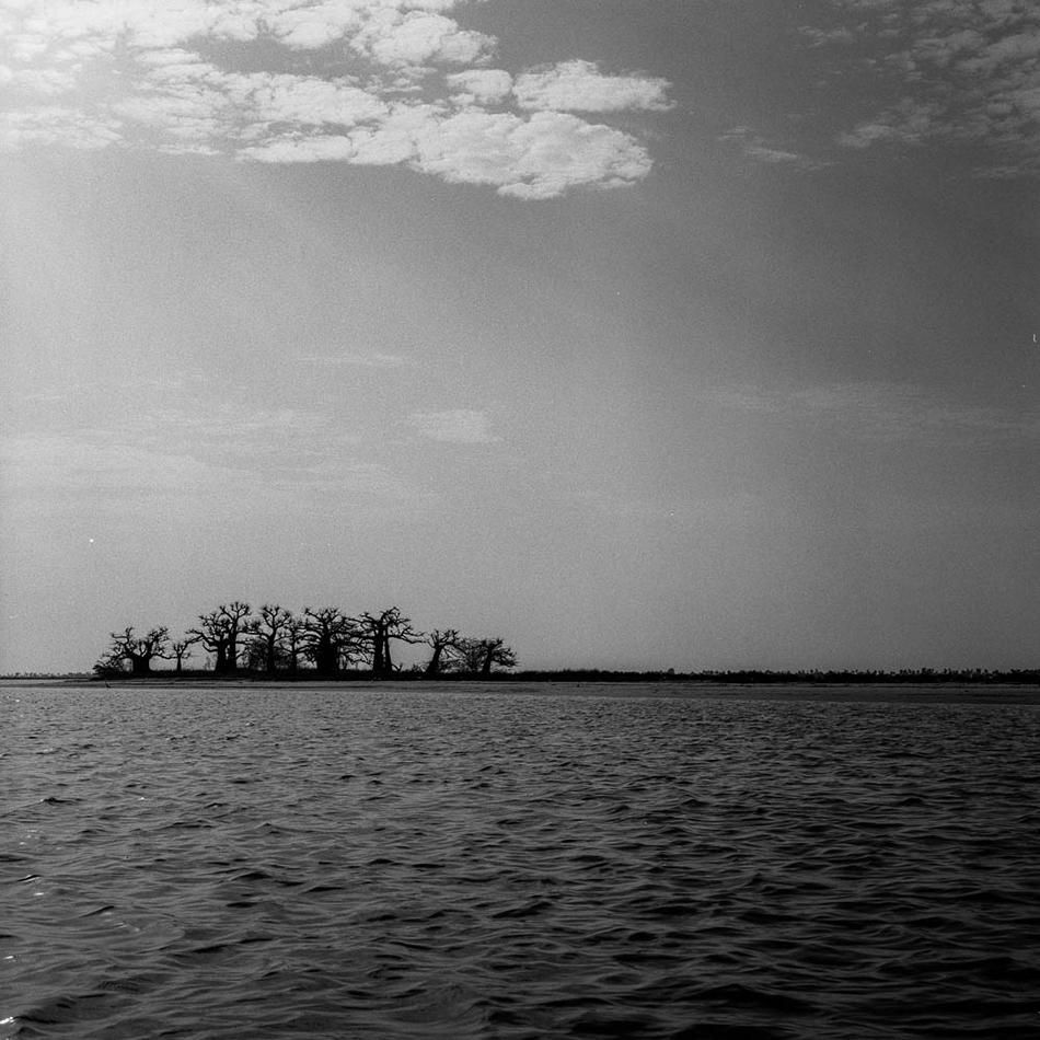 baobab-8.jpg