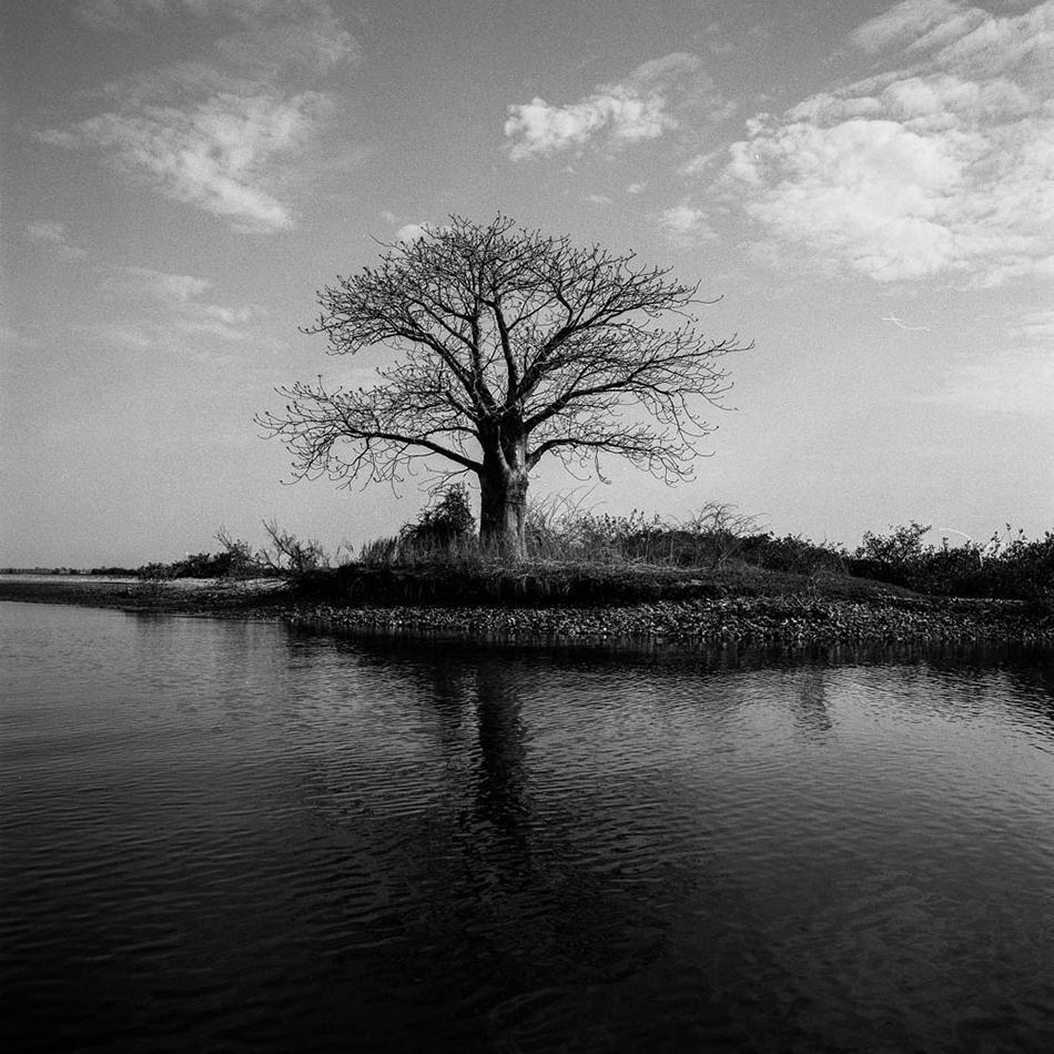 baobab-7.jpg