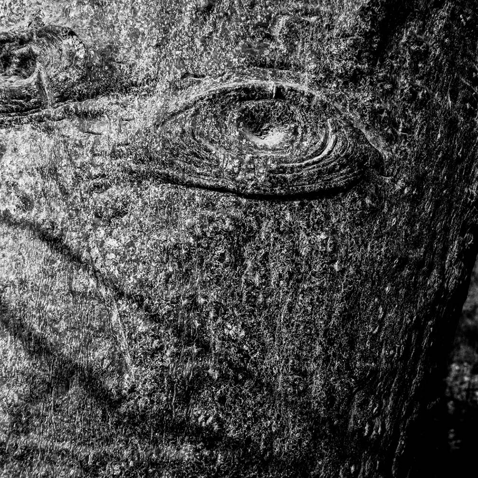 baobab-9.jpg
