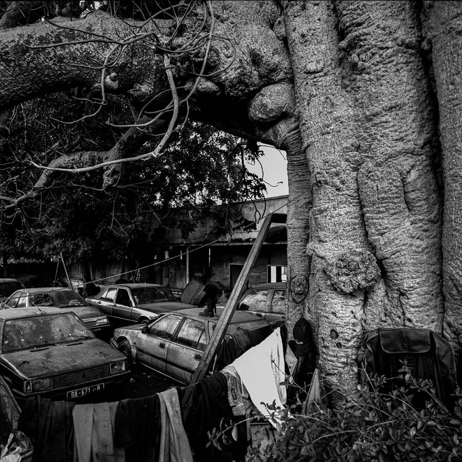baobab-14.jpg