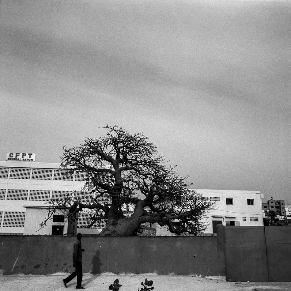 baobab-19.jpg
