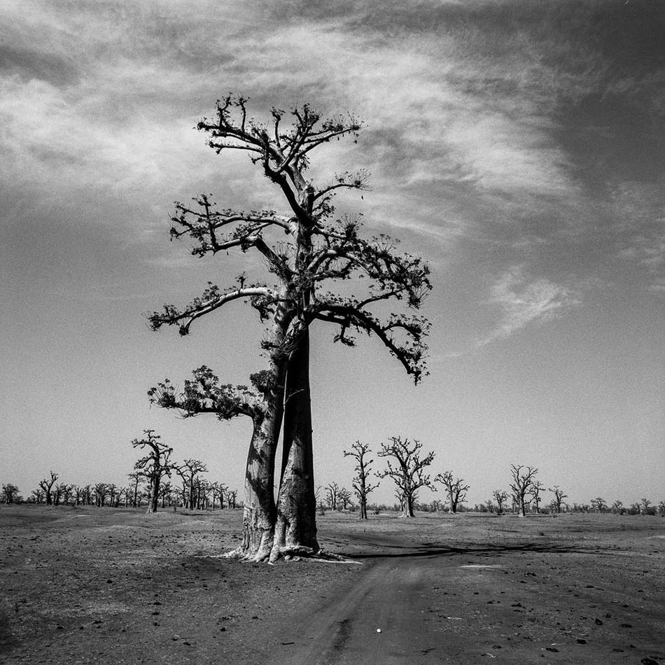 baobab-24.jpg