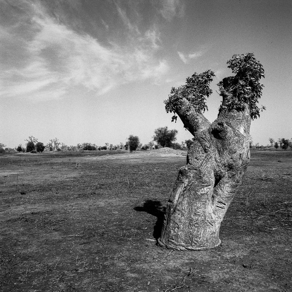 baobab-25.jpg