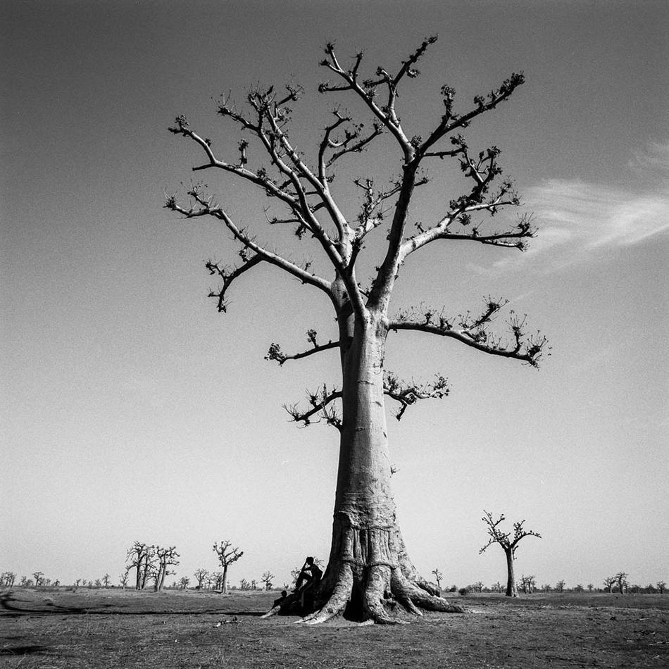 baobab-26.jpg