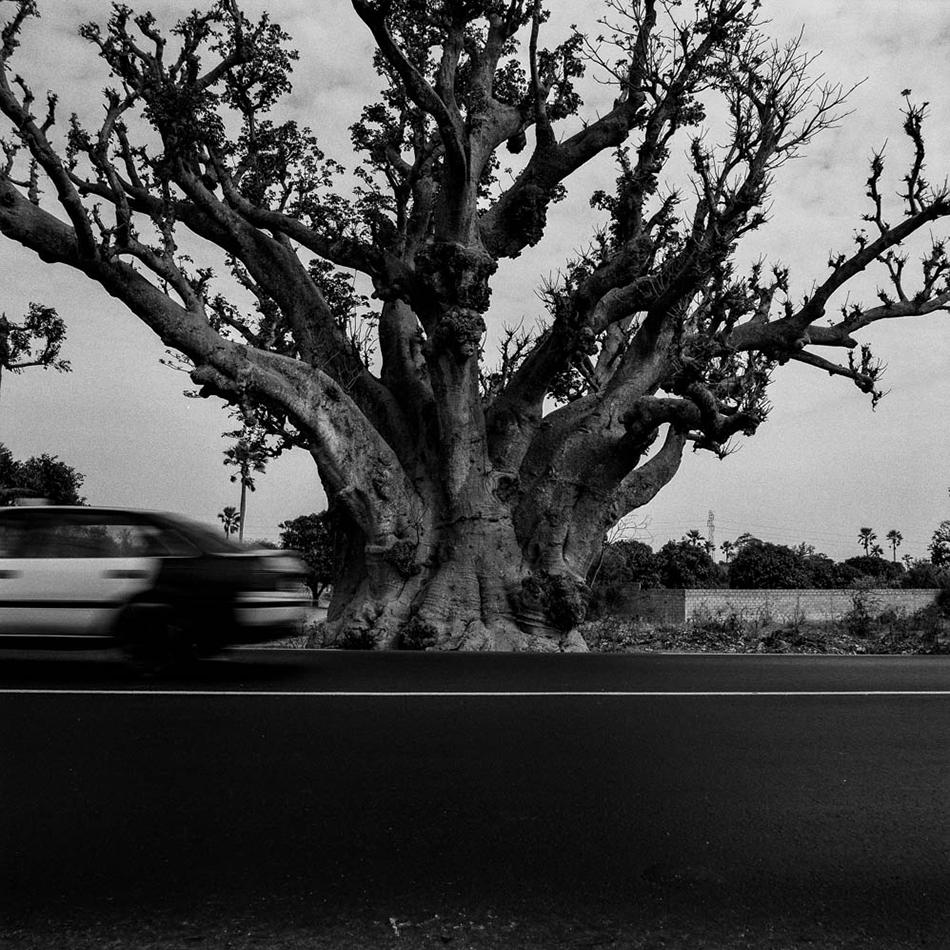 baobab-28.jpg