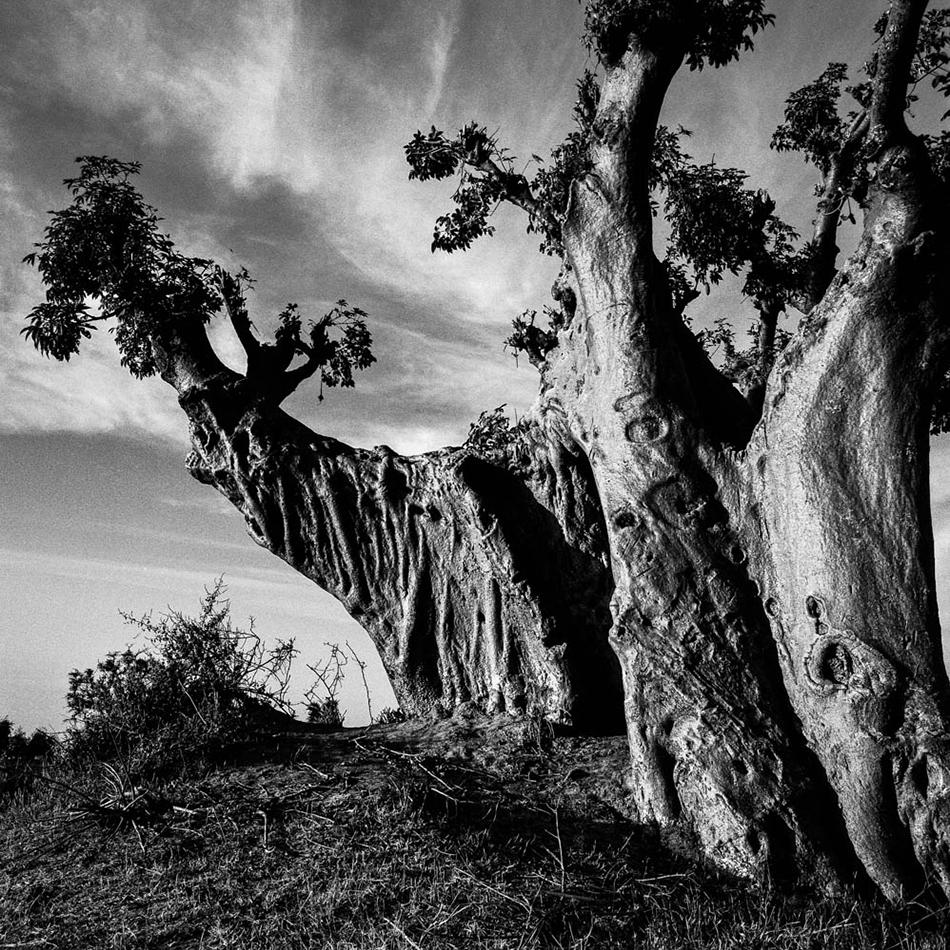 baobab-30.jpg