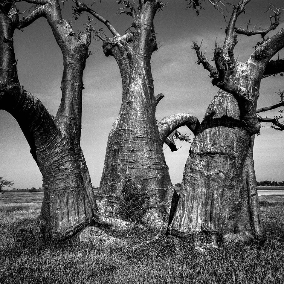 baobab-32.jpg