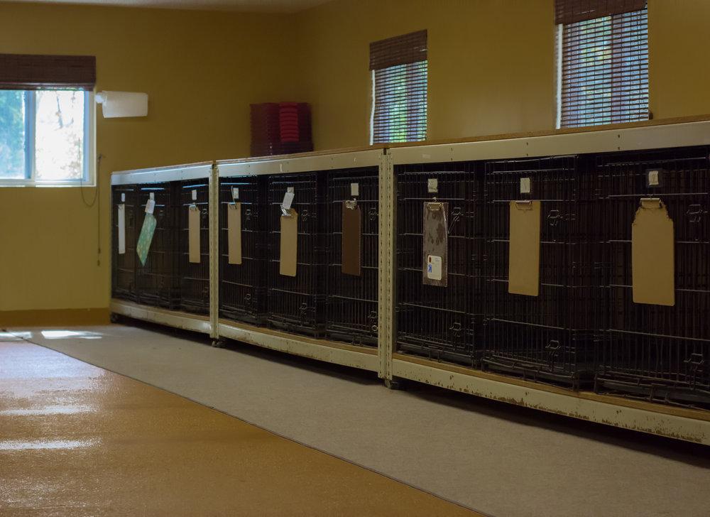 kennel inside2.jpg
