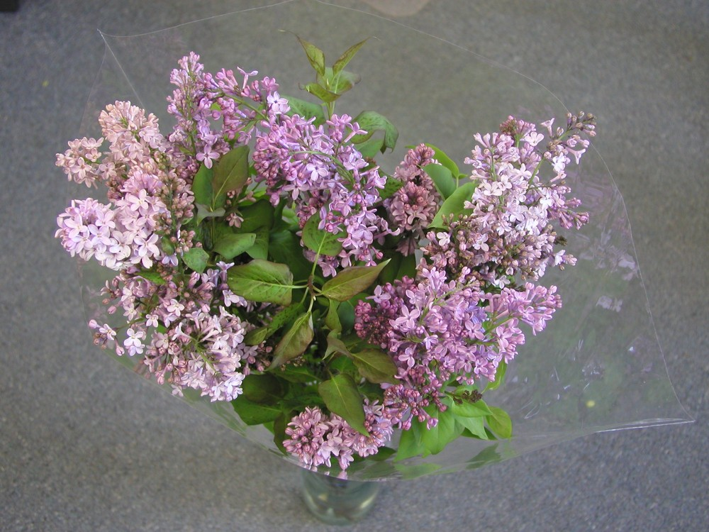 lilac bloomexpert.com