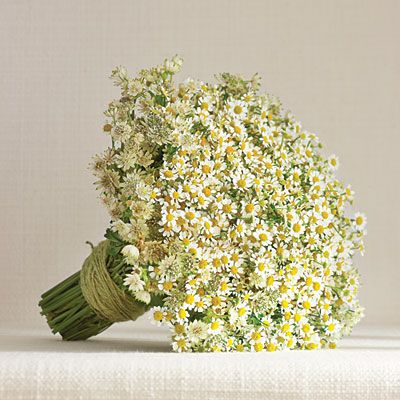 White Daisy Matricaria Bouquet