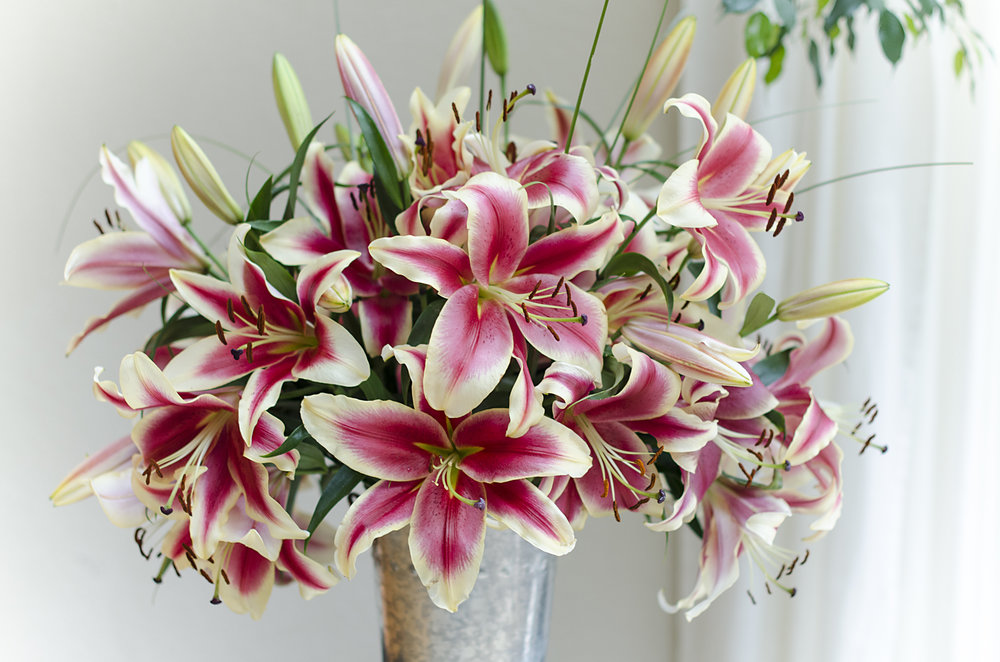 Bouquet of Oriental Lilies