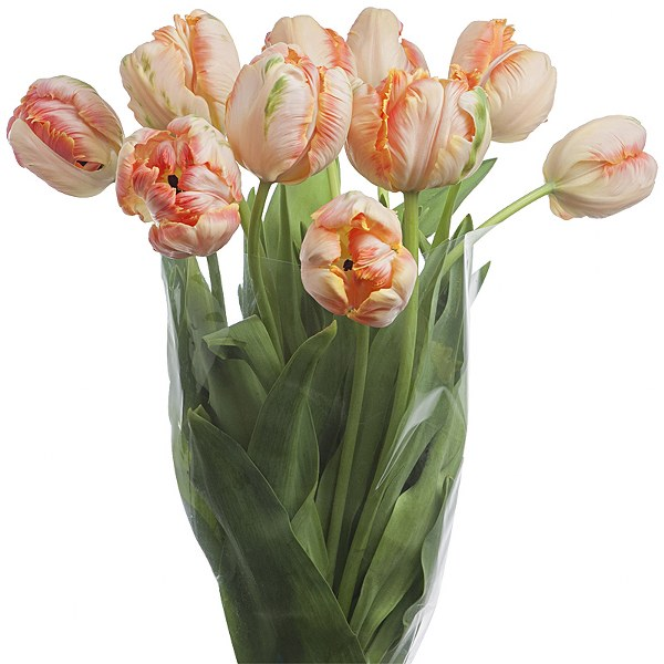 bloom expert parrot tulips