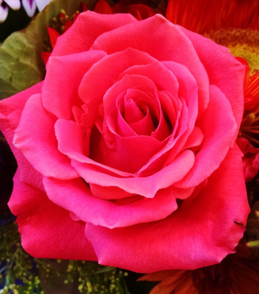 roses bloom expert