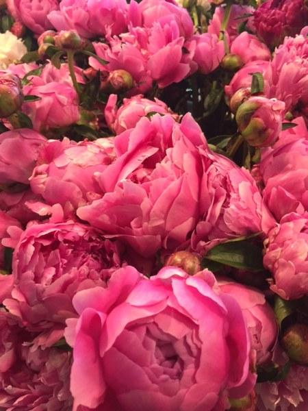 pink peonies_450x600.JPG