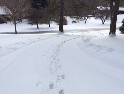cropped footprints in snow.png