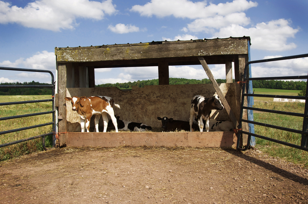 cow_pen.jpg