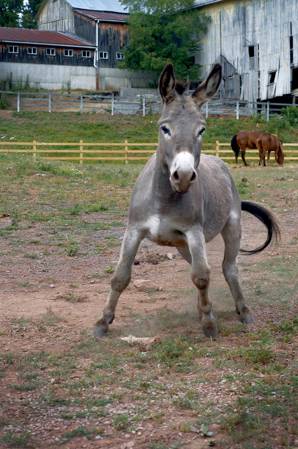 only_donkey.jpg