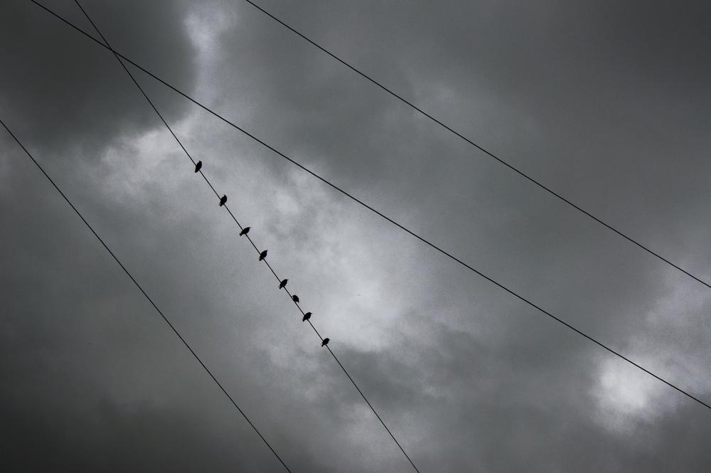 birds_wire.jpg