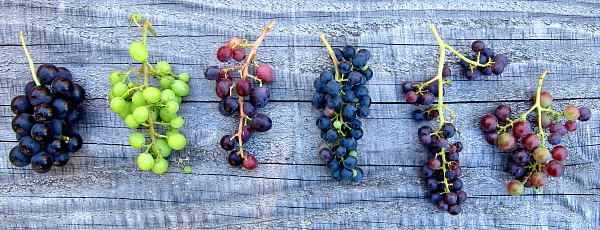 grapes on the wood