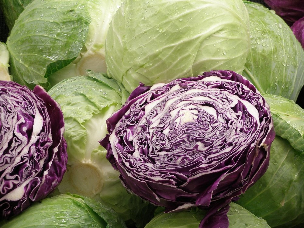 Cabbage.jpeg