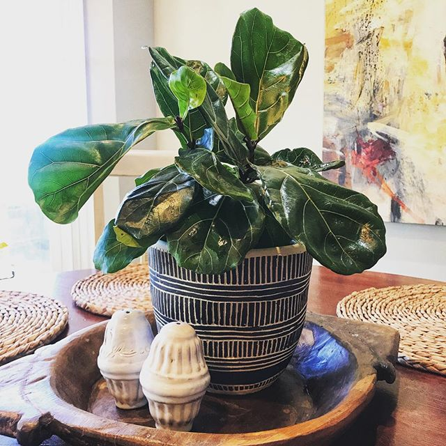 """Visited our friends @flowerfurbish to add a little """"life"""" in some spaces that needed a fresh look. So many new vessels and vases at C&P that are coming in daily!  #shoplocal #plantlife #CandPdesign #greenery #partakeinpaducah #paducahlife"""