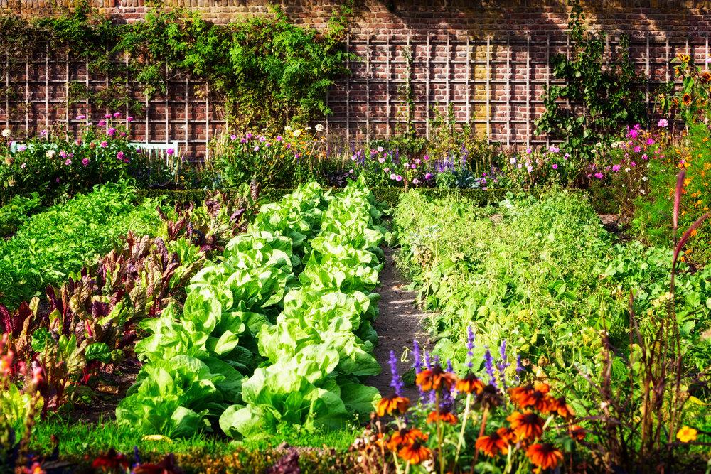 iStock-vegetable gardens.jpg