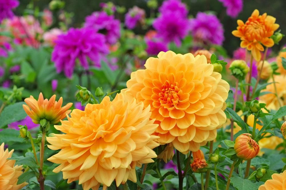iStock-flowers multicolor.jpg