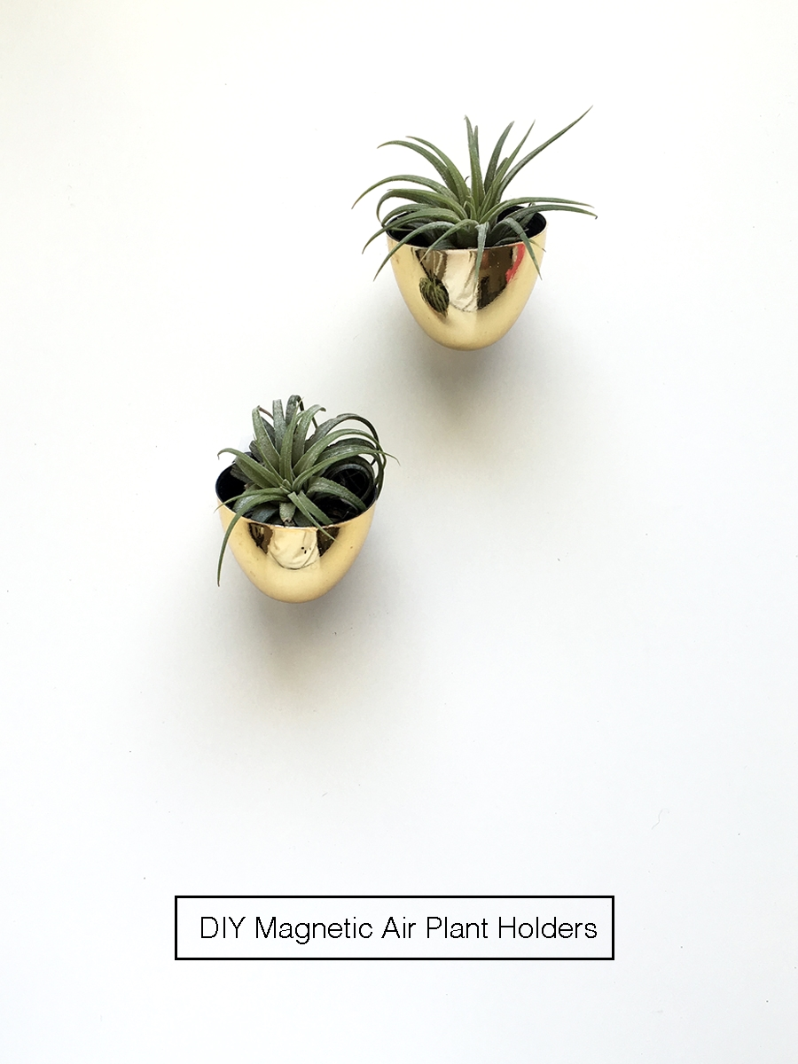 diy-magnetic-air-plant-holders-01