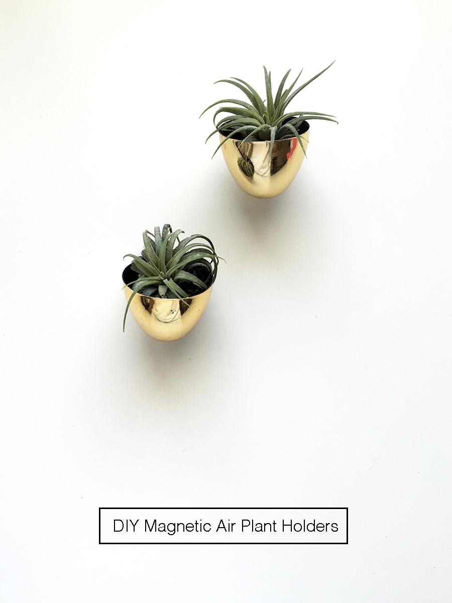 diy-magnetic-air-plant-holders-01