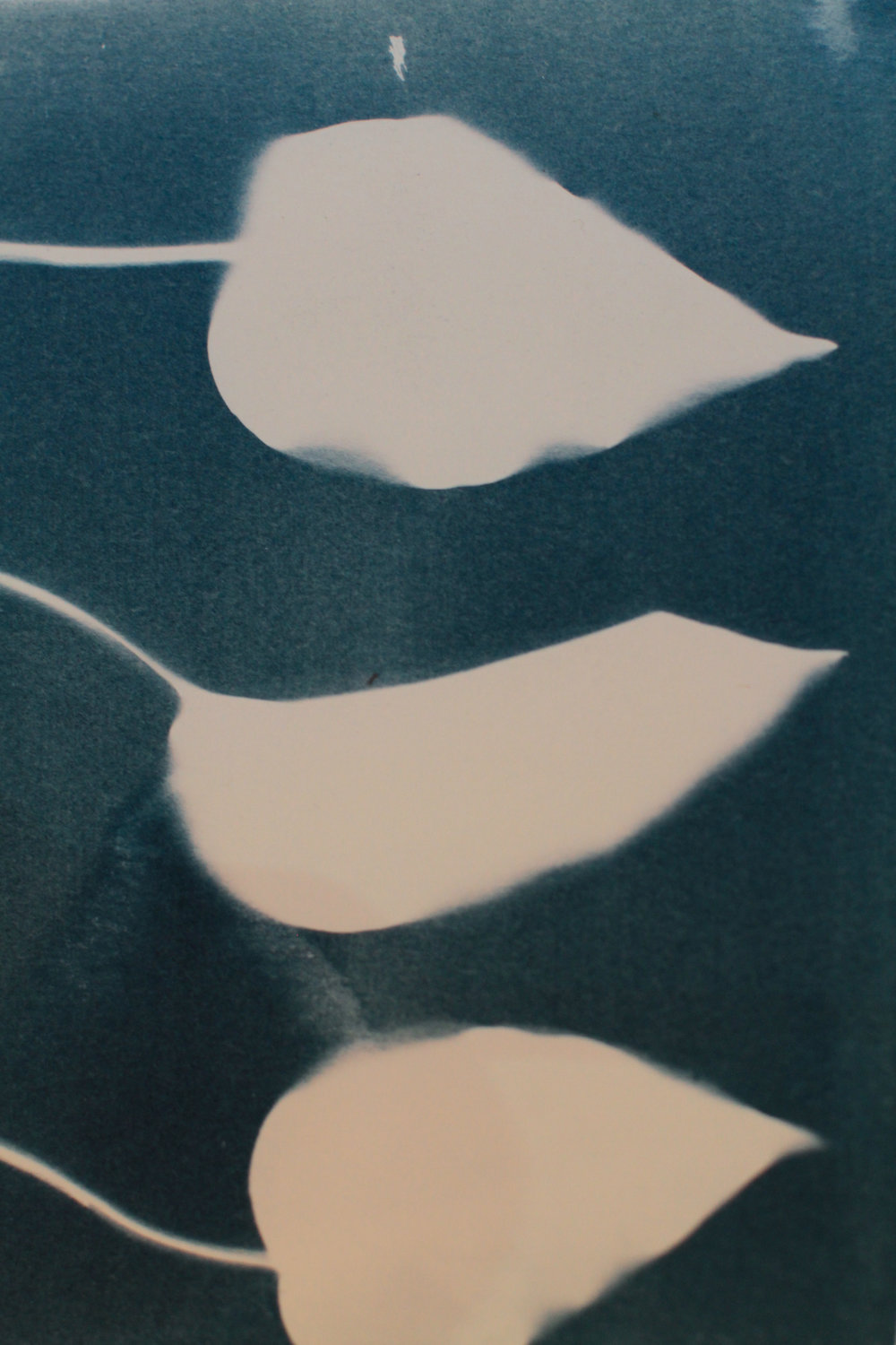 180619_faye_cyanotype_leaves.jpg