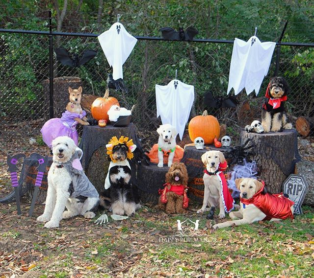 Happy Halloween from Happy Pup Manor! We wish everyone a spooky and safe day!! 🎃👻
